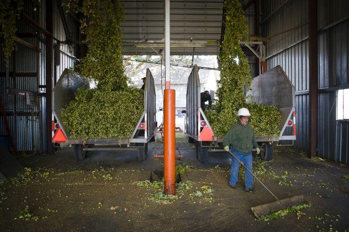 2013-november-december-1859-magazine-willamette-valley-oregon-hops-beer-goschie-farms-hop-trucks