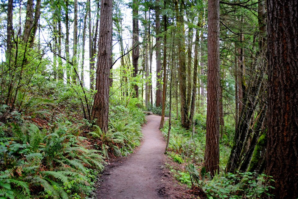 Forest_Park_Trail