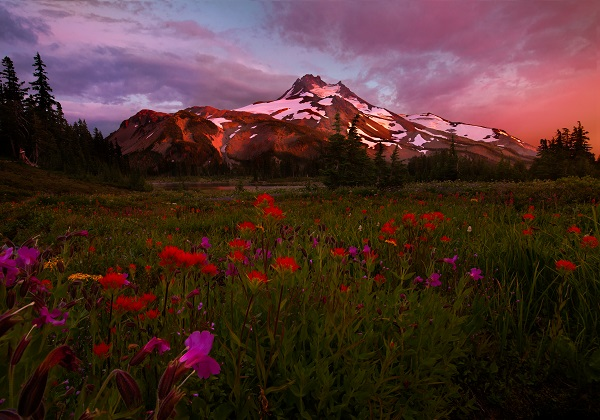 May_June_2015_Wildflowers_Gallery_MichaelBollino_001