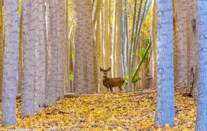 Photo-of-the-Week_Mike-Edwards_October-5_Boardman-Oregon_630x400
