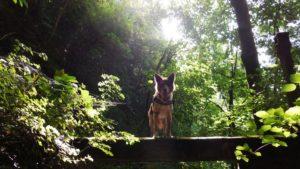 Ruffwear_Dog_Days_Photo_Contest_-DSCN0821