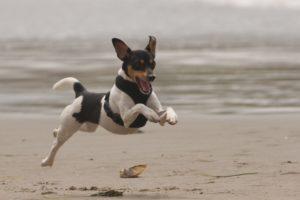 Ruffwear_Dog_Days_Photo_Contest_-IMG_0098