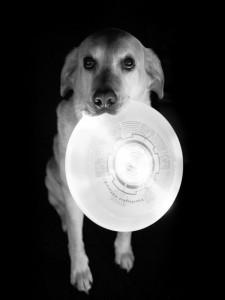 Ruffwear_Dog_Days_Photo_Contest_-_1200536