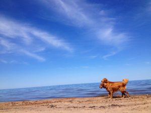 Ruffwear_Dog_Days_Photo_Contest_-justchillin