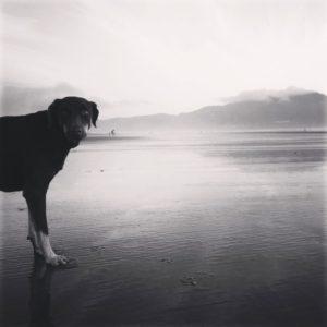 Ruffwear_Dog_Days_Photo_Contest_-summer19