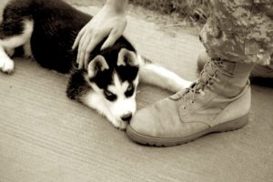 Ruffwear_Dog_Days_Photo_Contest_1274-Version2