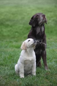 Ruffwear_Dog_Days_Photo_Contest_2-IMG_1587_mod
