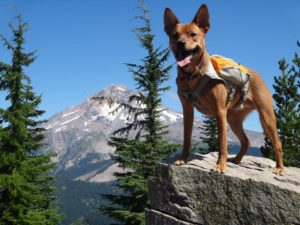 Ruffwear_Dog_Days_Photo_Contest_5_133254032_n