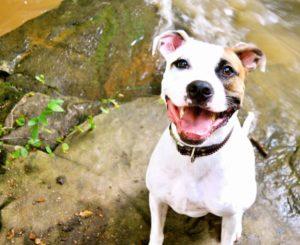 Ruffwear_Dog_Days_Photo_Contest__1346514474_o