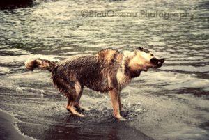 Ruffwear_Dog_Days_Photo_Contest_baileyshakeoff