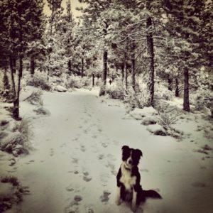 cassondra-schindler-happy-winter-walk