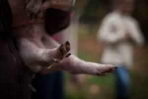 dundee_pigs_feature_worden_hilll_farm_talia_filipek-42