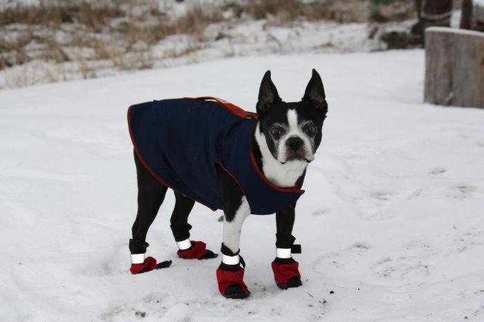 jeff-boyer-yoda-bundled-up-snow-wilsonville