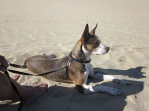 lori-vick-madrid-izzy-camping-sand
