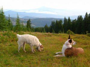 nancy-carlson-Bennie-Sage-Timberline-Trail