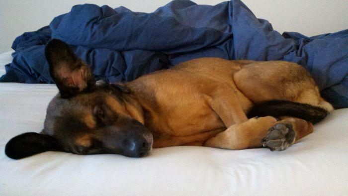phil-johnson-koda-bed-lying-down