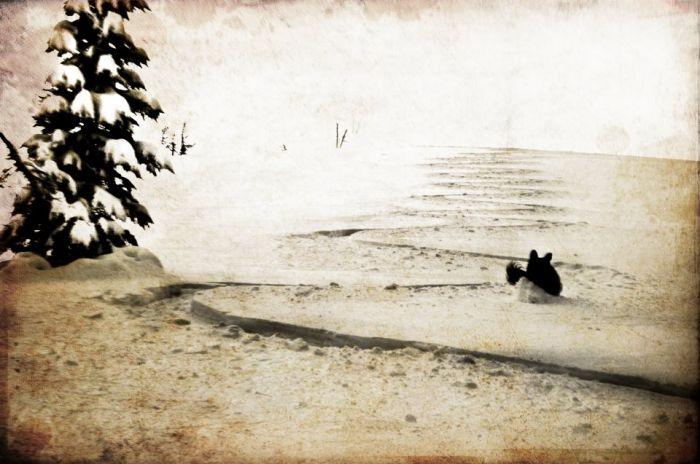 shannon-sbarra-keoki-snow-tracks-sepia