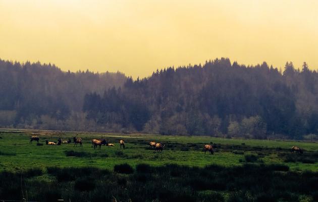 1859_Photo-of-the-Week_Dec-28_Lisa-McKinney_Reedsport-Oregon_630x400