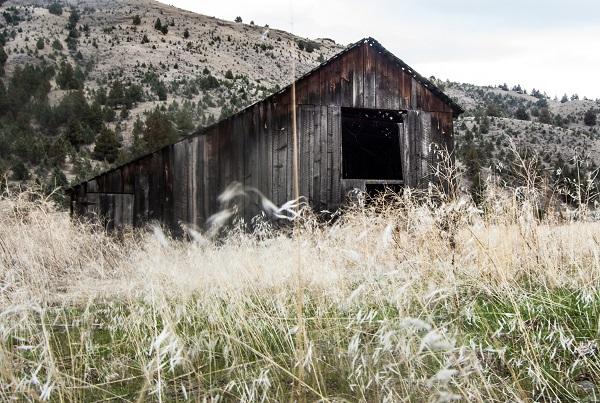 grass valley, highway 216, talia galvin