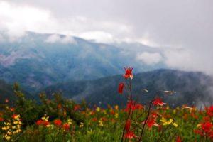 1859_wildflowers_stephanie_hinson_10