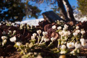 1859_wildflowers_stephanie_hinson_11