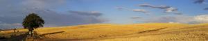 Eastern-Oregon-Field-No-Crop