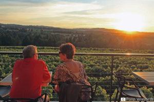 SOCIAL-Ponzi-Vineyards
