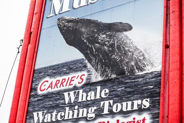 Talia_Galvin_Coast_Carrie_Newell_Whalewatching_Depoe_Bay_Museum_Sharks_Sea_Lions_1
