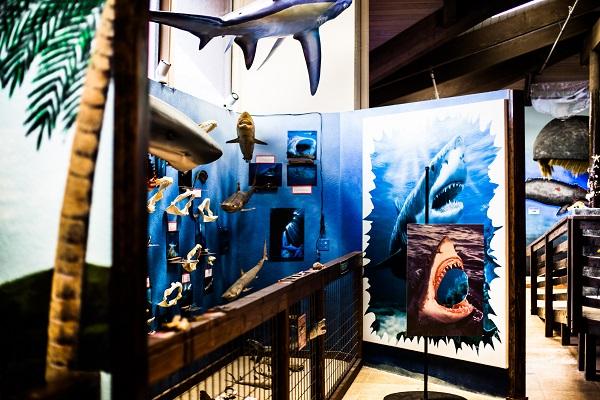Talia_Galvin_Coast_Carrie_Newell_Whalewatching_Depoe_Bay_Museum_Sharks_Sea_Lions_3