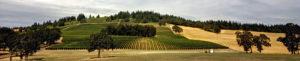 Willamette-Valley-Vineyard