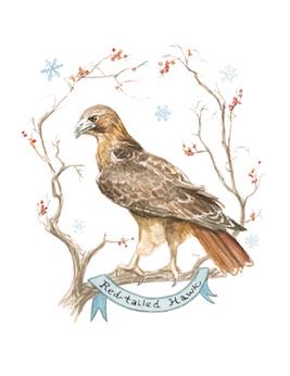 1859_Nov_Dec_2015_Feature-Birding_Karen_Eland_hawk