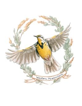 1859_Nov_Dec_2015_Feature-Birding_Karen_Eland_meadowlark