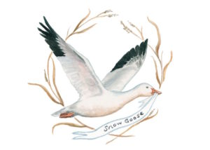 1859_Nov_Dec_2015_Feature-Birding_Karen_Eland_snow-goose-copy
