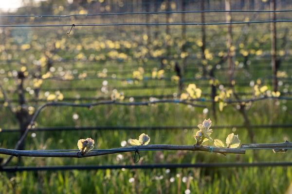 Krista Rossow, oregon wine country