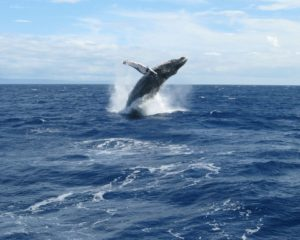 1859_web_events_whale-watching