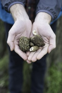 May_June_FarmToTable_Mushrooms_CharlotteDupont_004