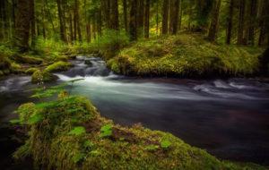 POW_Candice-Watson_ZigZag-Creek_Mt-Hood_630x400