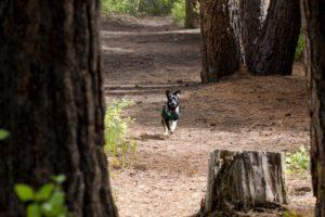 oregon_hikes_wychus_creek_trail_Valerie_saiki