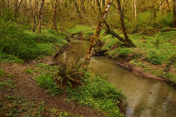 Hiking_Portland_Oregon