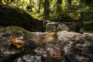 tyron creek state natural area