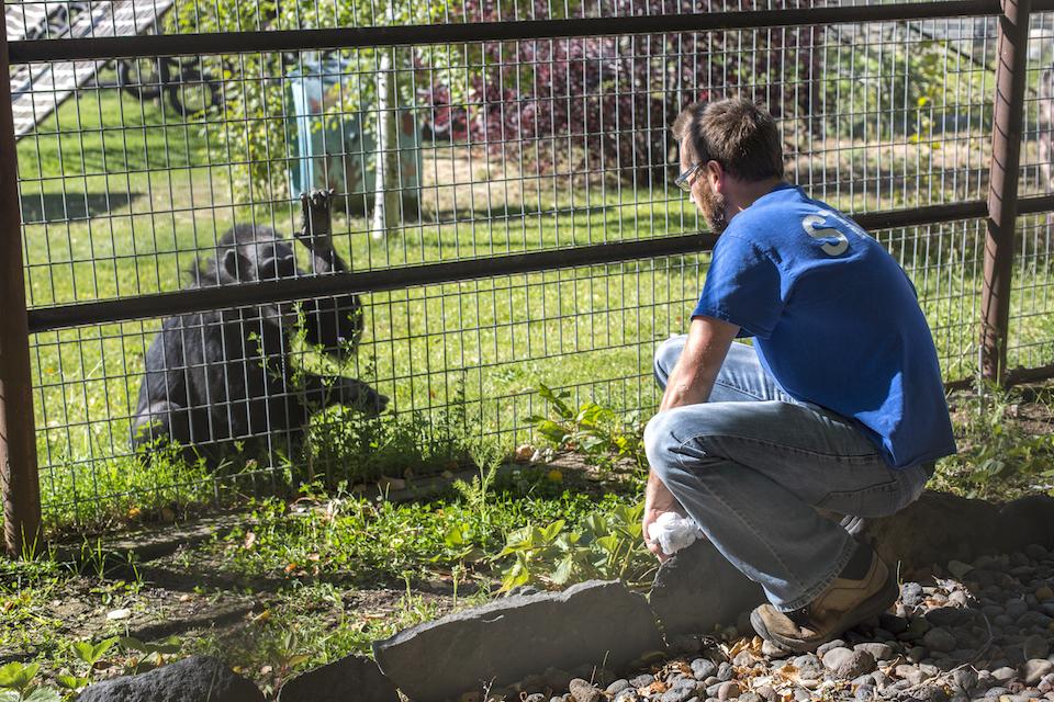 kevin doner, chimps inc.