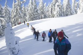 snowshoe tours, crater lake national park