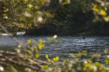 Steelhead Fisherman, North Umpqua