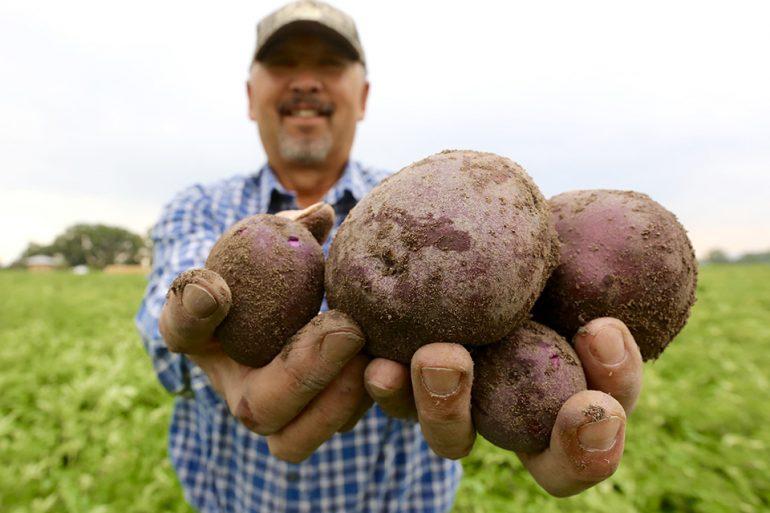 Oregon Potatoes