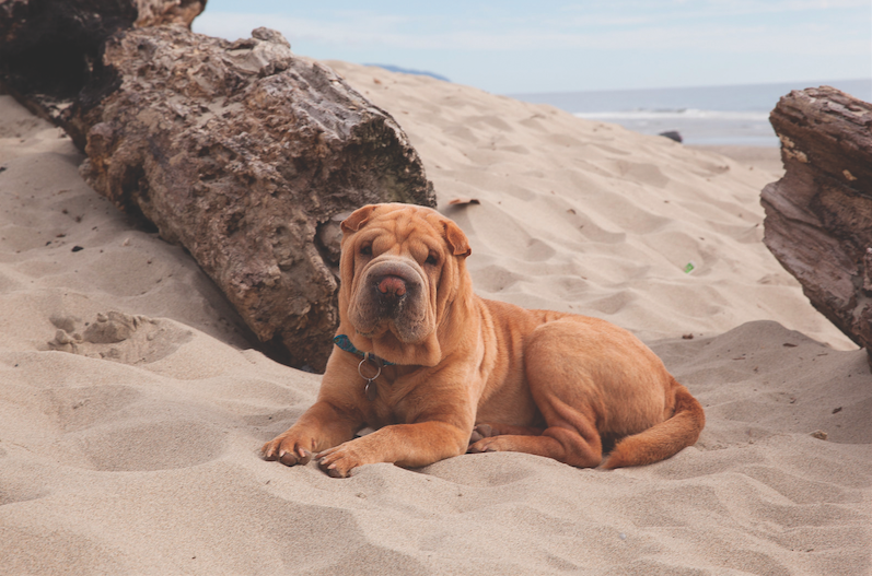 Oregons Best Pet Friendly Getaways
