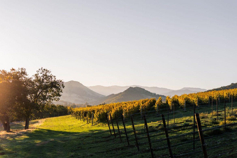 Irvine & Roberts Vineyards