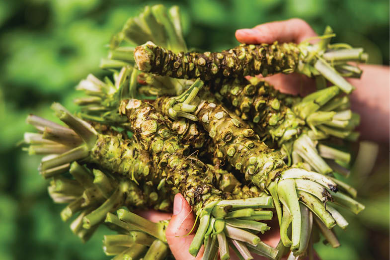 Oregon wasabi