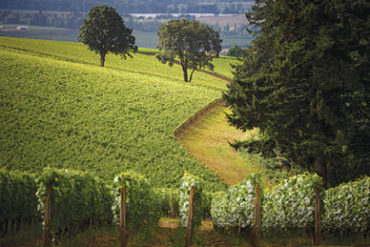 Oregon wine country, France