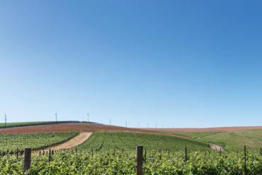 Milton-Freewater's cobblestone soil, naturally enhanced by Walla Walla River deposits, yields distinctive wines.